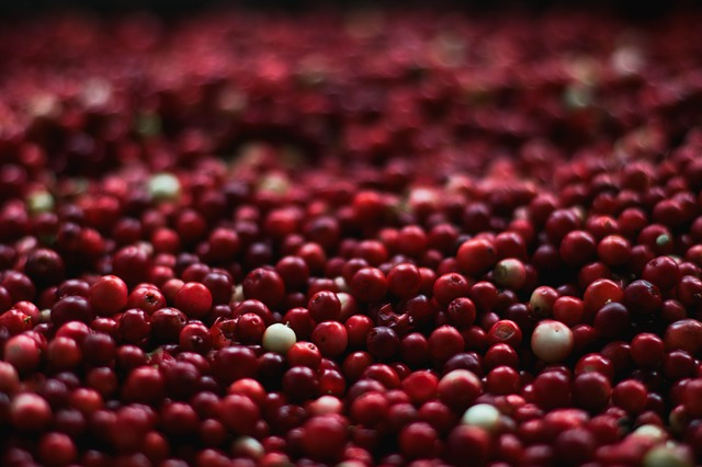 American cranberry.